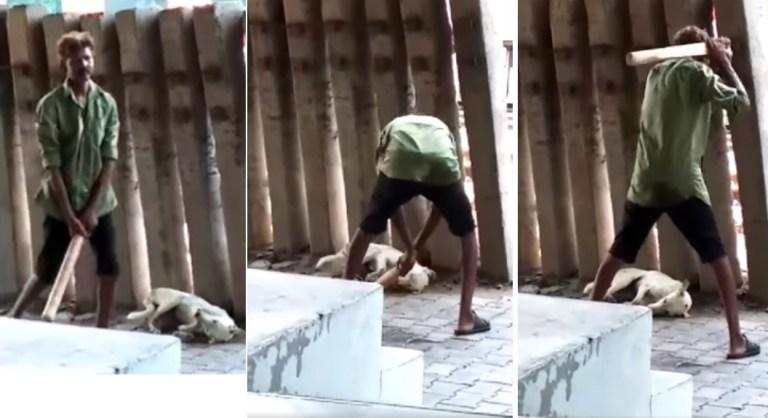 drunk man stray dog beaten to death Image 2 16 07 2020