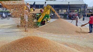 Punjab Wheat FB
