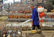02virus briefing china birdflu articleLarge